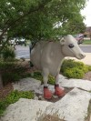 Fiberglass Chicago Cow with Boxer Theme Featuring Gloves and Black Eye