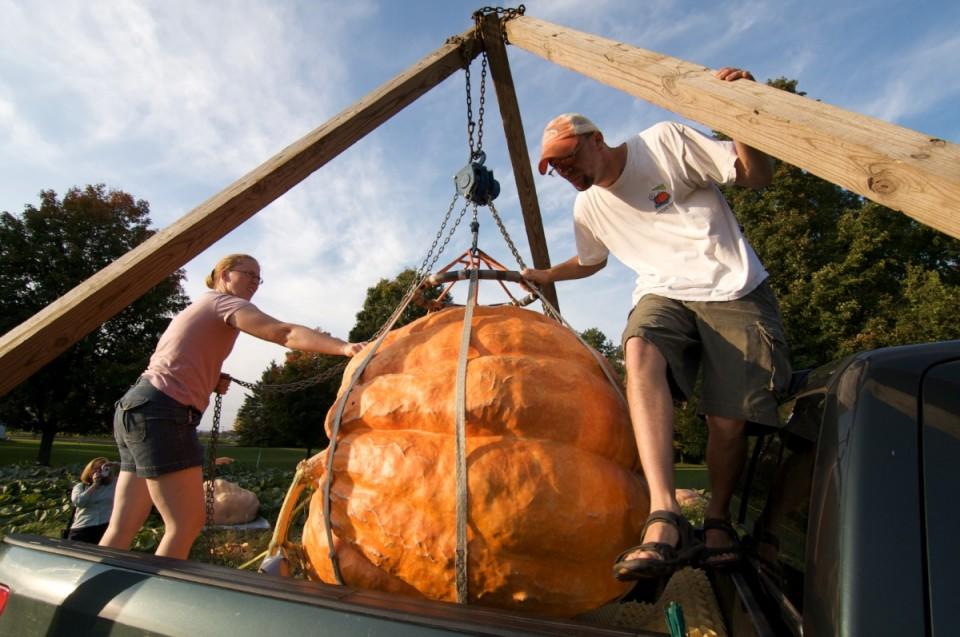 Giant Pumpkin 2