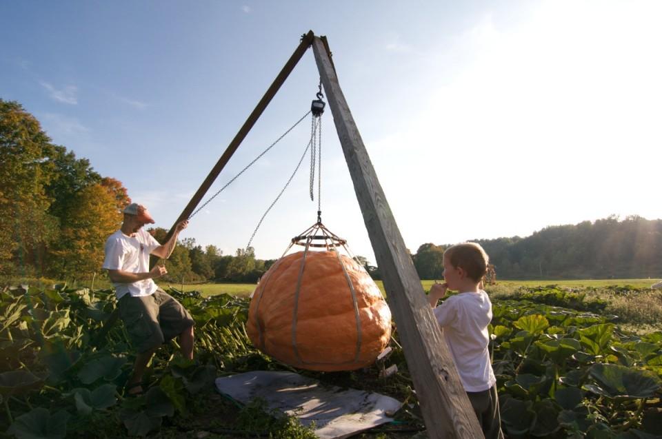Giant Pumpkin 6