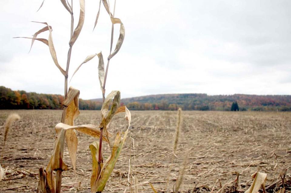 Vacant corn field