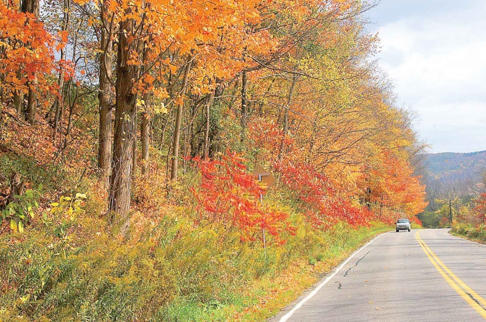 Foliage along Route 446 between Cuba and Hinsdale