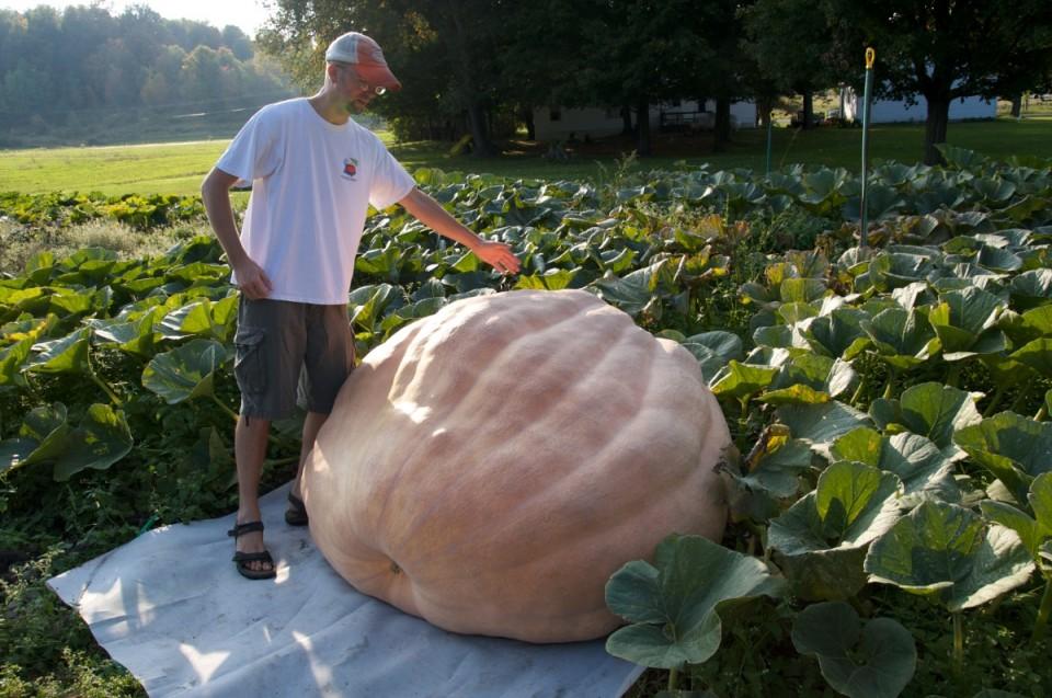 Giant Pumpkin 5