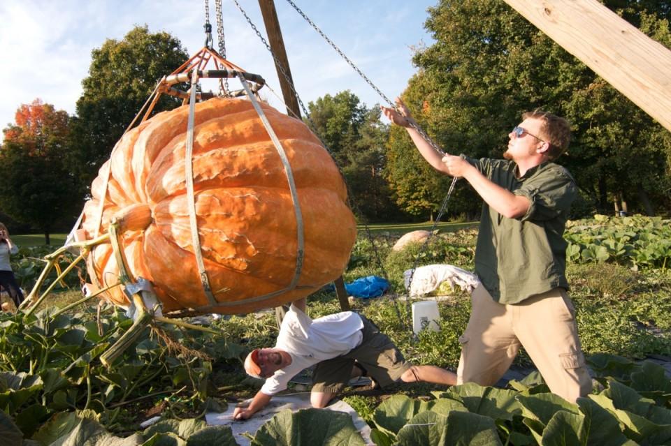 Giant Pumpkin 1