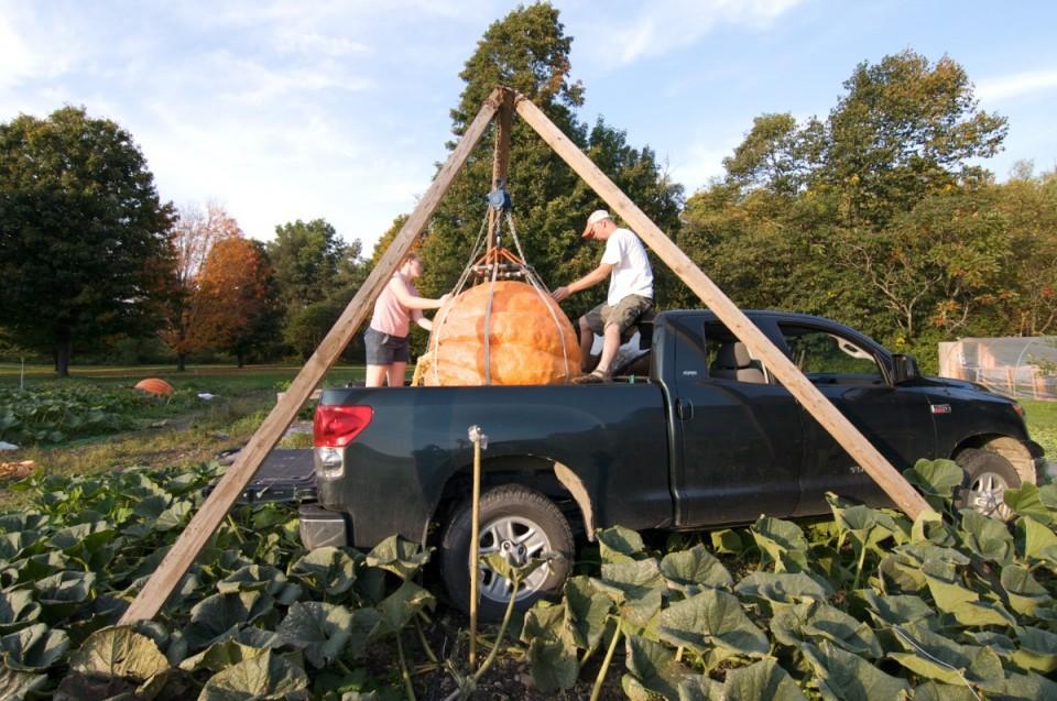 Giant Pumpkin 8