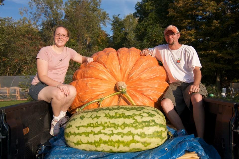 Giant Pumpkin 7