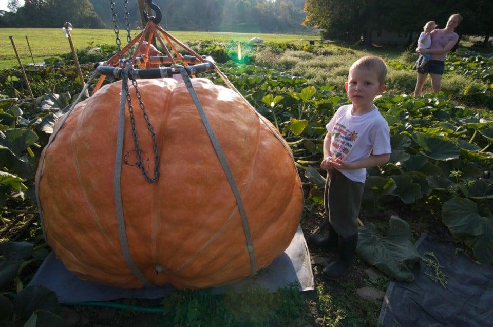 Giant Pumpkin 4