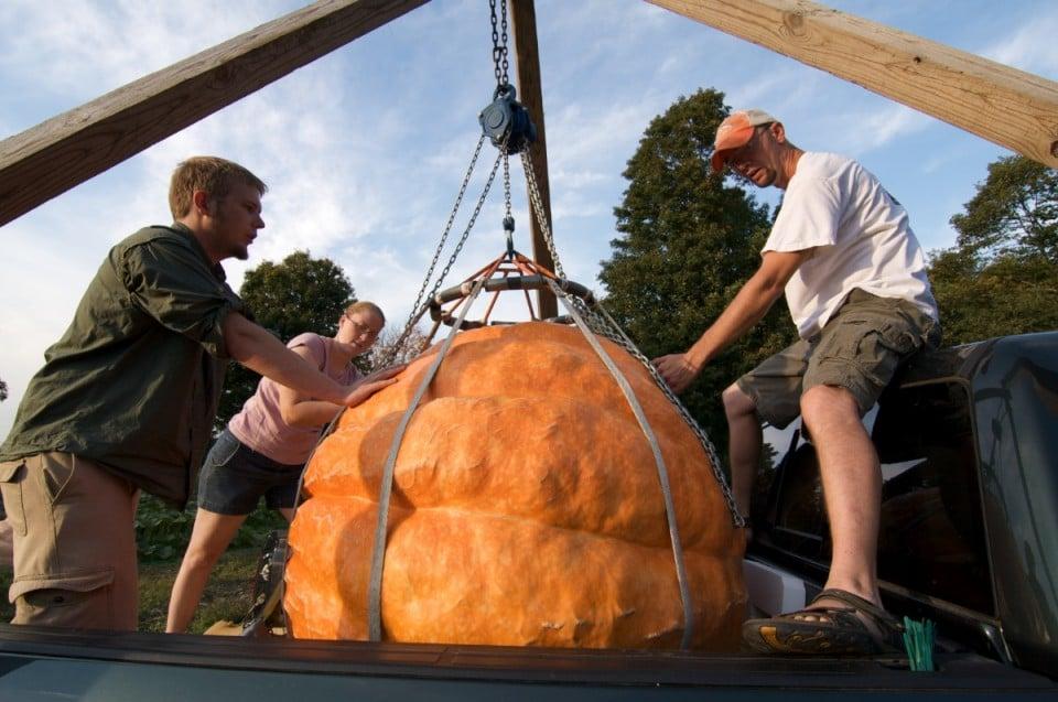 Giant Pumpkin 3