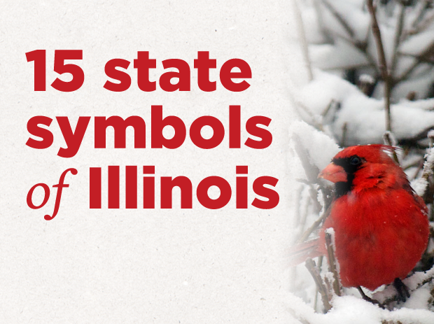 State Symbols Of Illinois Gallery