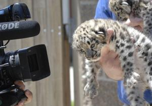 Photos: Snow leopards born at Miller Park Zoo
