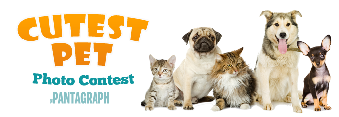 The Pantagraph's Cutest Pet Contest