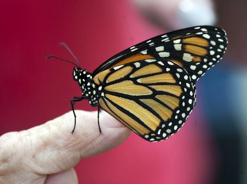 Becki Butterfly Nude Photos 9