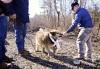 Dog rescued
