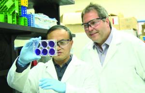 <p>Kansas State University</p><p><strong>Avian flu vaccine</strong>: Wenjun Ma, assistant professor of diagnostic medicine and pathobiology at Kansas State University, left, and Jürgen Richt, Regents distinguished professor of veterinary medicine and director of the U.S. Department of Homeland Security's Center of Excellence for Emerging and Zoonotic Animal Diseases, have developed vaccines for H5N1 and H7N9, two emerging strains of avian influenza. The strains are zoonotic and can be transmitted from chickens to pigs and humans.</p>