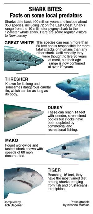 Local shark facts 2014