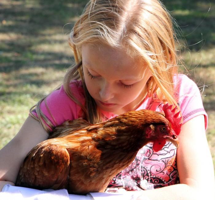 Chickens77510013.jpg