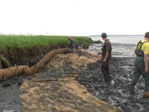 Erosion coconut mats