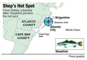 Hot Spot Weakfish In Atlantic City: Weakfish are around the Atlantic City jetties, and in back bays and inlets all along South Jersey. Try for them with ink Zoom and bucktails with chartreuse minnows, or with bait such as bloodworm and cut or strips of mullet.