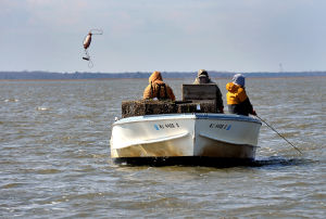 """GHOSTPOT: Crabbers aboard the """"Miss Ginny""""; Phil Andersen, Bob Dinkelacker, and John Reese, all of Galloway Township, search for ghost pots in Great Bay, Wednesday Mar. 13, 2013. A NOAA grant fund the recovery of unused crab pots that litter the bay. (The Press of Atlantic City/Staff Photo by Michael Ein)  - Michael Ein"""
