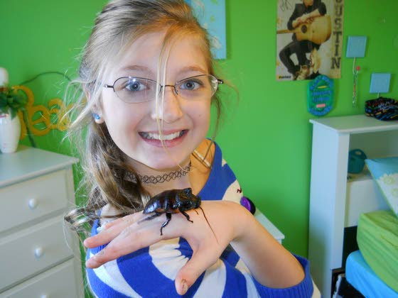 Loved bugs: Some insects make good pets