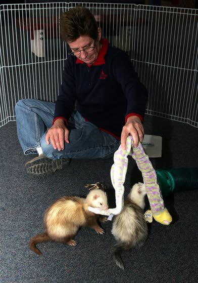 Frisky ferrets find fans while staying high and dry at the aquarium