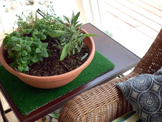 Indoor herb gardening can yield home remedies