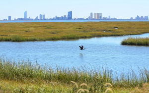 FORSYTHE CLEANUP: Atlantic City can be seen off the south side of the Edwin B. Forsythe National Wildlife Refuge. A multi-million dollar contract has been awarded for cleanup after the refuge was deluged with debris from Hurricane Sandy nearly a year ago. - Ben Fogletto