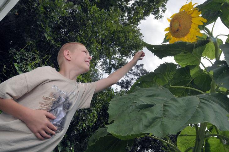 EGAP A21 Sunflowers