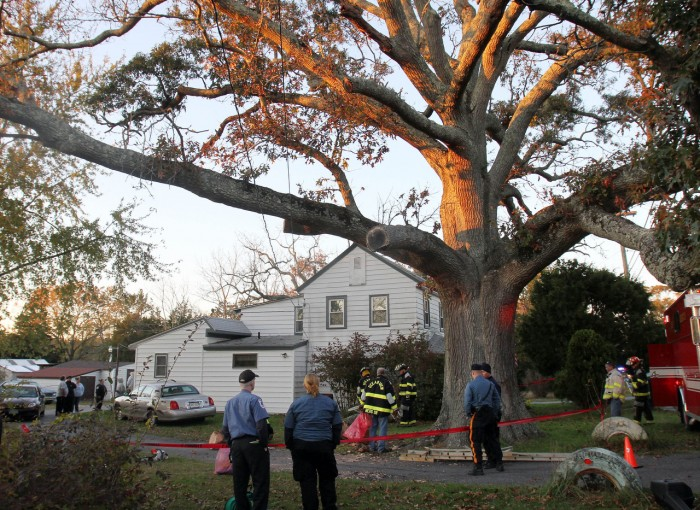 Tree Accident81008311.jpg