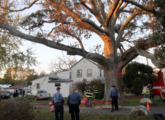 Tree Accident81008311.jpg