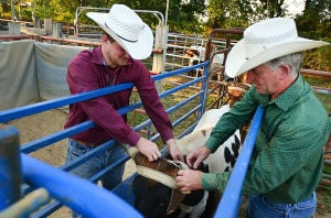 Butch Days Rodeo: Butch Dase and his son Travis Dase (left) load calfs in the shute for practice at his Bridgeton ranch. Monday September 30 2013 Butch Dase and his son Travis Dase are competing in the Team Roping competition at the Atlantic City Boardwalk Rodeo this weekend. - Ben Fogletto