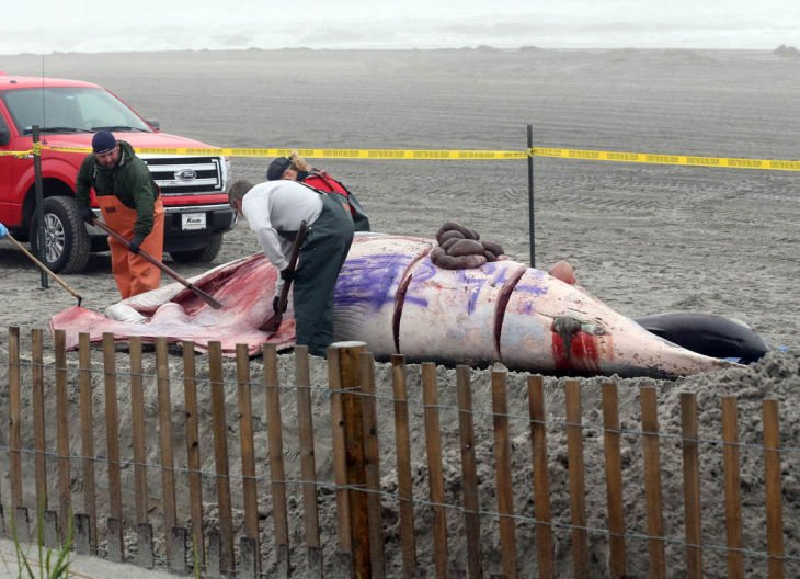 Whale in AC