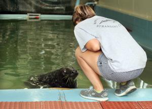 Marine Mammal Stranding Center