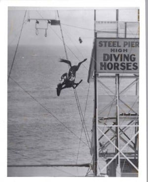 On bringing back the diving horse at Steel Pier
