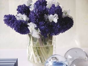 Create Fresh-cut Flower Bouquets For Mother's Day: Stems of white sweet pea accent the singular beauty of purple hyacinths in this fresh bouquet of flowers.