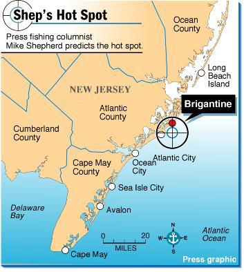 Friday morning fishing report brigantine surf bringing for Brigantine fishing report