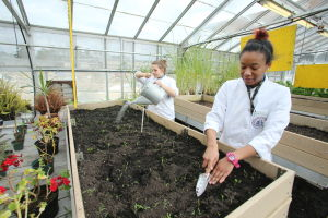 GREEN EDUCATION: Somer Gegeckas, 19, of Mount Royal, left and Akeema Telemaque, 21 of Willingboro, right foreground students working in greenhouse at Atlantic Cape Community College Thursday, Feb 20, 2014. - Edward Lea