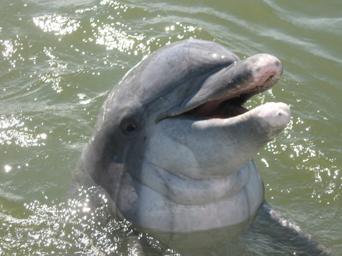 Dolphin 56
