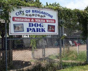 DOG DAYS IN BRIGANTINE
