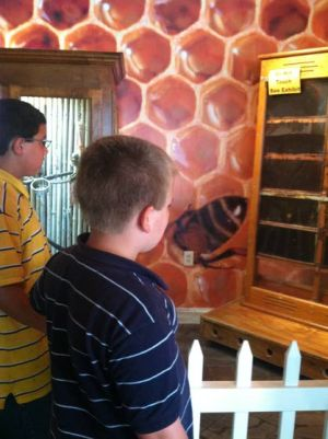 Cape May County Zoo Adds Exhibit Allowing Visitors To Watch Bees Work: Joseph Martin, 11, left, and brother Austin, 9, of Lancaster, Pa., checked out the new Observation Beehive at the Cape May Zoo. - Devin Loring