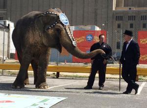 Elephant Monoply