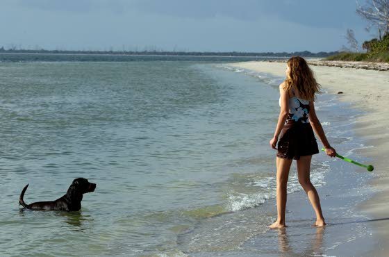 Visit dog-friendly Florida with your best friend