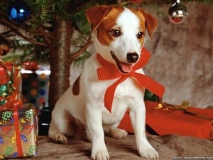 Tips for giving a dog as a Christmas present