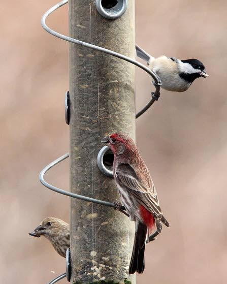 Pick a feeder based on the birds you want to attract