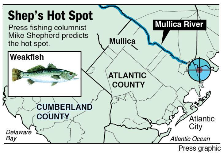 Shep Hot Spot weakfish Mullica River
