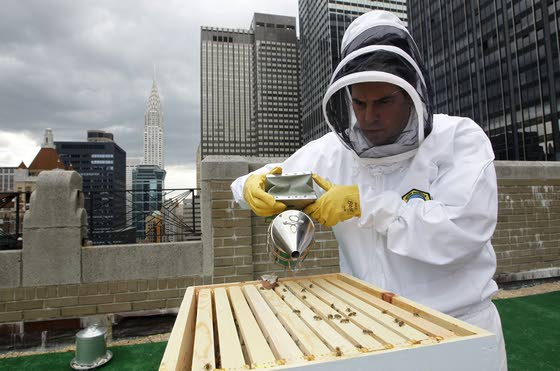Bees the latest guests to check in at Waldorf Astoria