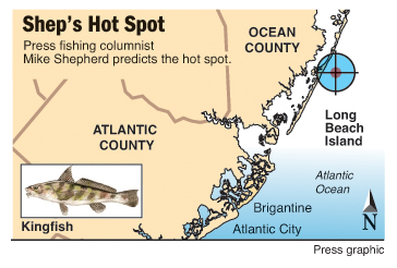 Shep's Hot Spot kingfish LBI