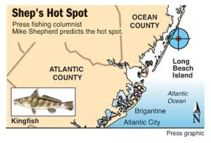 Shep's Hot Spot kingfish LBI