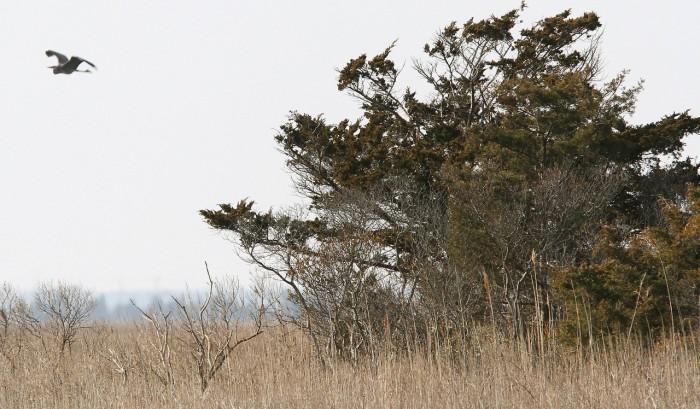 Wetlands92473512.jpg