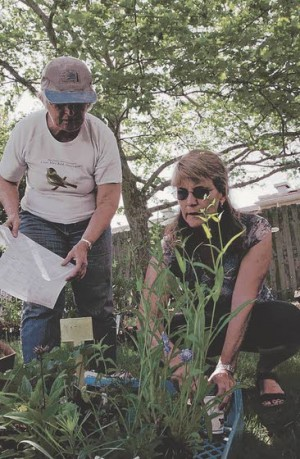 Promoting native plantsOrganizations hold events to raise funds, distribute local species