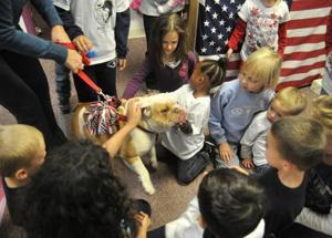 Hamster beats fish, hermit crab in student voting for school pet